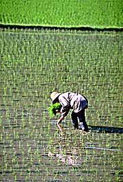 http://www.anatol.org/images/japan/japan1/nails/fukushima-rice-planting.jpg