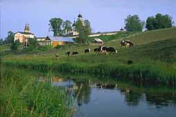 Landscape with herd